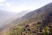 mountain terraces in langtang area.jpg