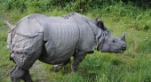 One horned Rhino.jpg