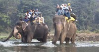 Chitwan National Park and Elephant Safari