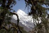 Mt Langtang II (Ghenge Lirung) 6571m– it dominates the view of early few days of trek.jpg