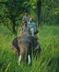 Himalayan wildlife